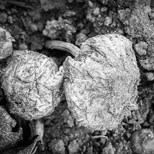 Hike-Monument-Valley 5-16-17 Mushrooms B&W-07707