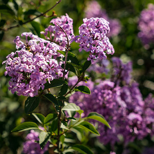 Hike-Monument-Valley 5-16-17 Lilac-07695
