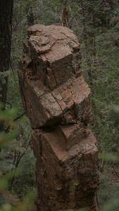 Mt. Cutler Hike ~ Colorado