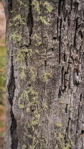 Mueller State Park -06-01-17 Mistletoe-07977