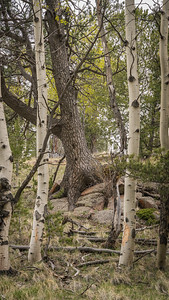 Mueller State Park -06-01-17 - Between a Rock and a Tree-08029