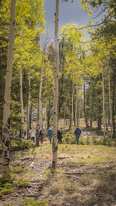 Mueller State Park -06-01-17 Into the Woods-08003