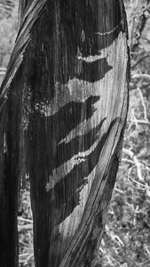 TurkeyCabin-TreeDemiseB&W-03751