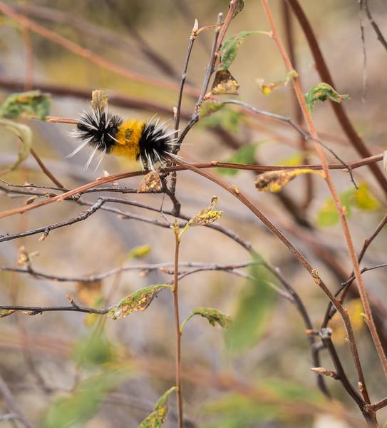 Narrow Gauge-Catterpillar-04202