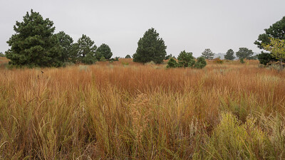 PalmerHike-Grasses-00021