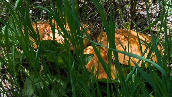 RainbowGultch-Fungi-02848