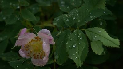 RainbowGultch-Flower-02766
