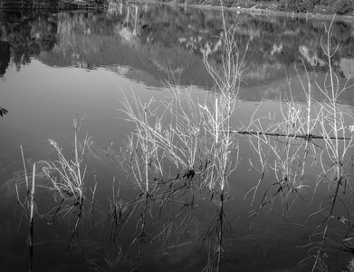 Bock Lake - Black and White