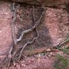 RedRock-Roots-03873