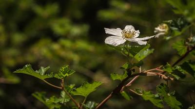 7 Bridges 6-15-17 Flower and Bug-08345