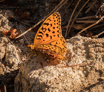 Spruce Mountain - Pre Hike-Butterfly-08612