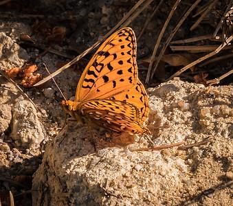 Spruce Mountain - Pre Hike-Butterfly-08612
