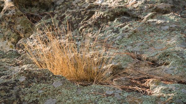 Spruce Mountain-Flora-00410