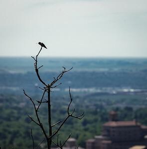 A Lone Hummingbird