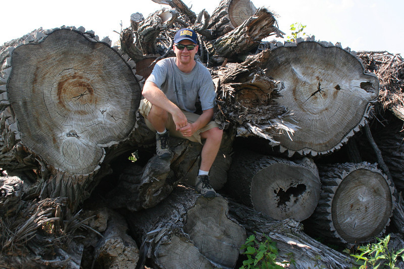 Logs three-quarters my height in diameter...there's something you don't see every day...