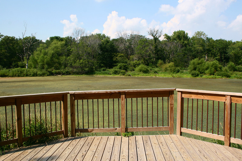 Buttonbush Pond