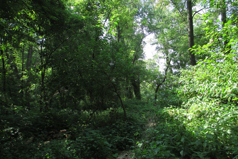 It quickly became clear that for whatever reason most folks don't continue down to the Ohio River as the trail suddenly became very overgrown...