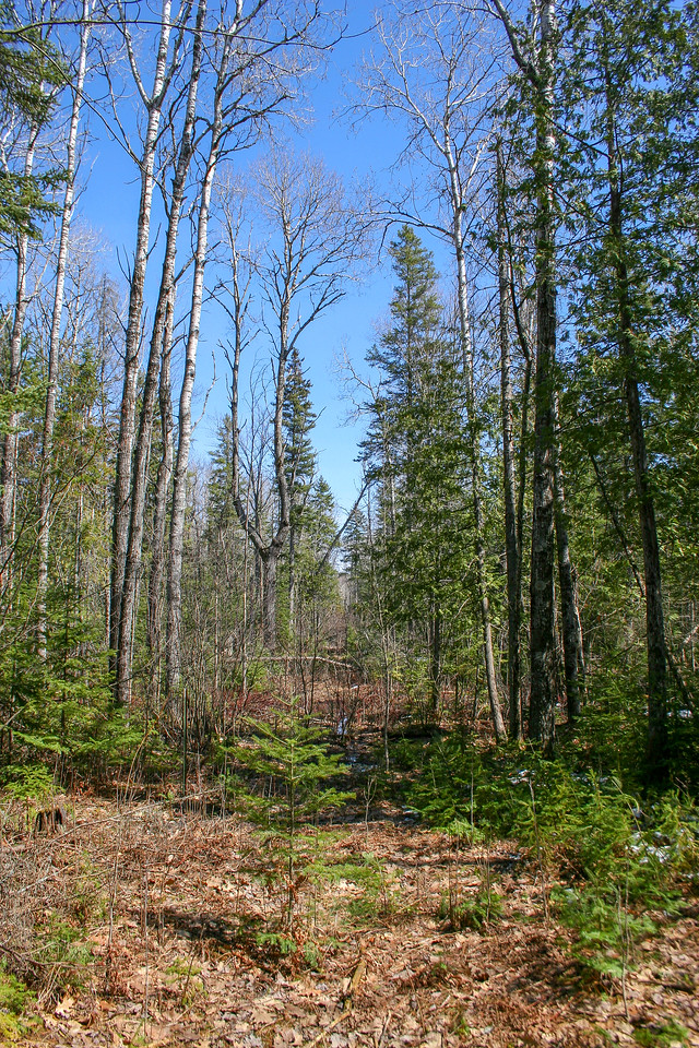 An opening in the forest...possibly an old logging road?