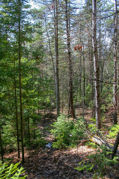 Preserve Loop Trail -- 690'