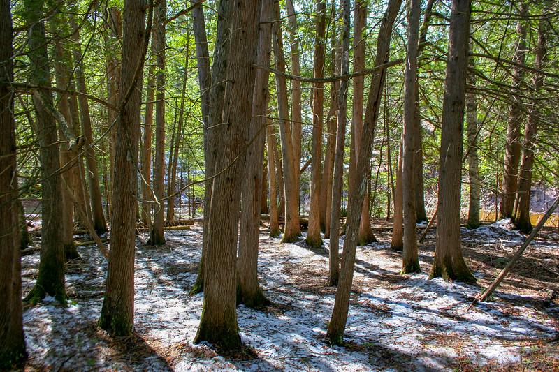 Preserve Loop Trail -- 660'