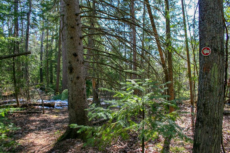 Preserve Loop Trail -- 700'