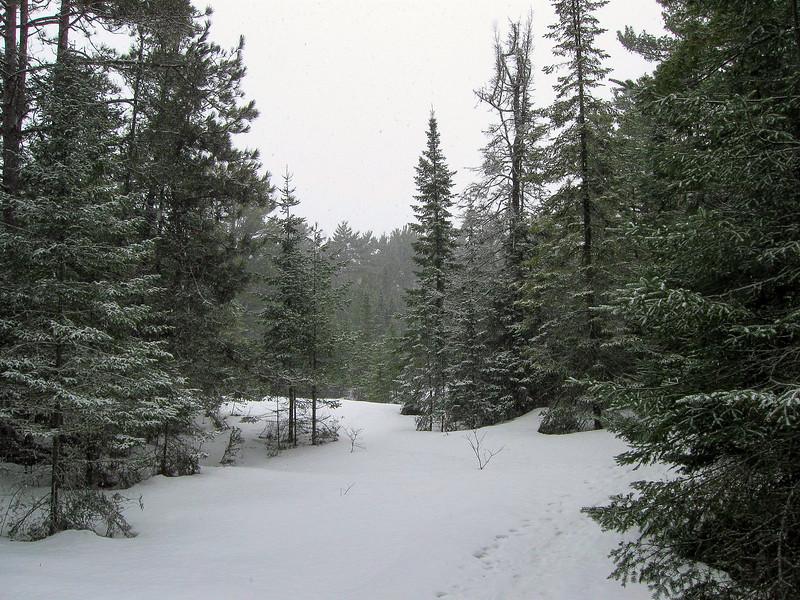Besser Natural Area Loop Trail -- 590'