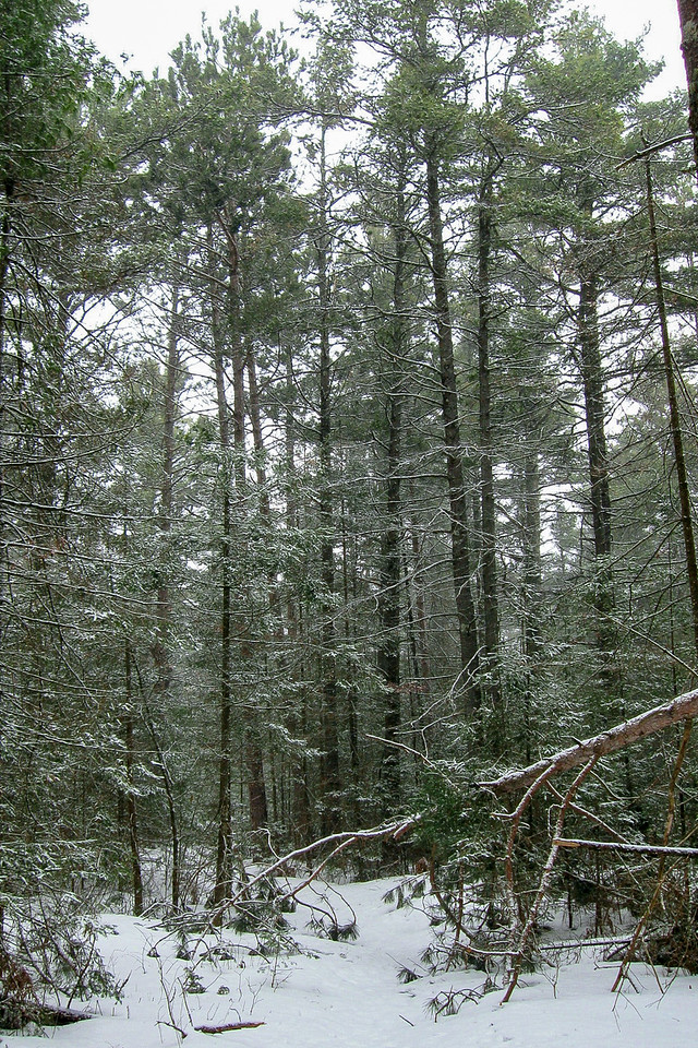 The cold wind eventually drove me back into the shelter of the woods...