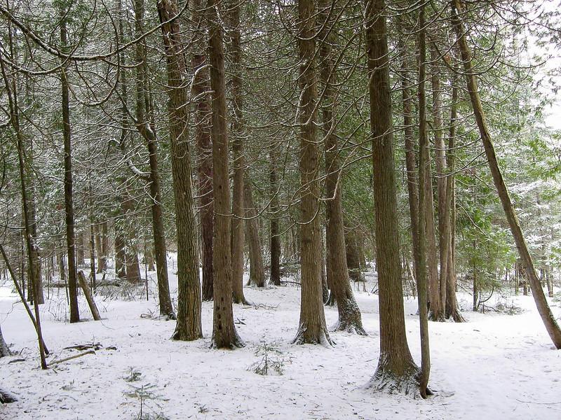 Besser Natural Area Loop Trail