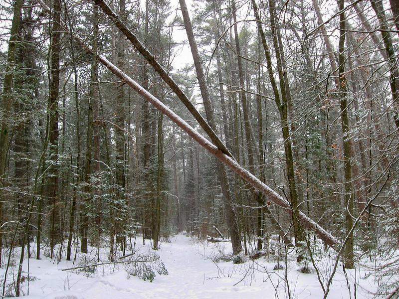 Besser Natural Area Loop Trail -- 600'