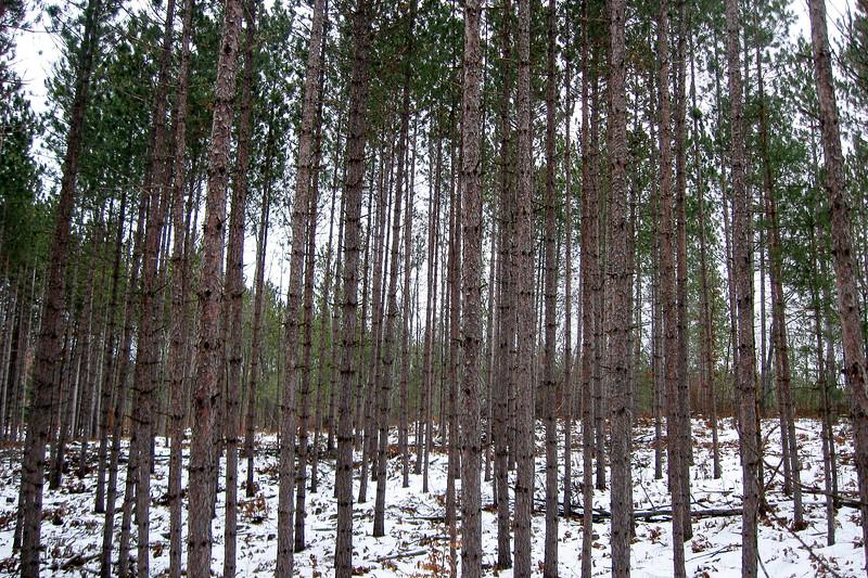 Eagle's Roost Loop Trail