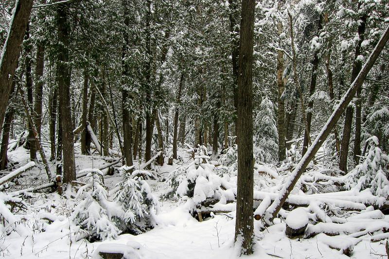 South Cedar Creek Unofficial Path