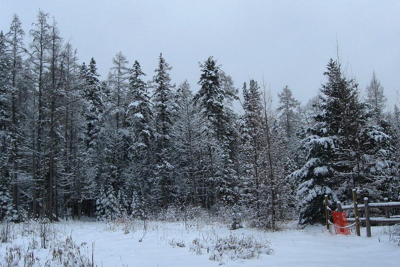 North Cedar Creek-South Cedar Creek Trail Junction