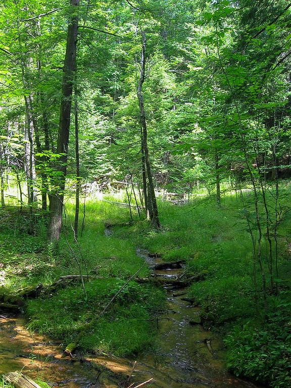 Carp Creek splits up into a half dozen or more feeder tributaries at the head of the gorge...