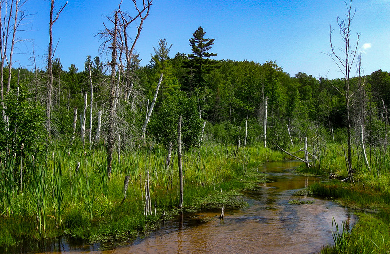 Another shot of tranquil Carp Creek...