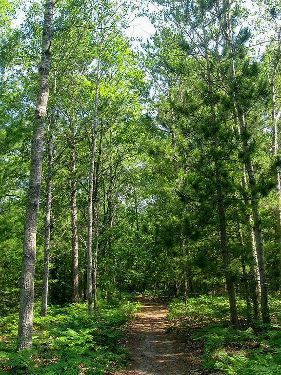 The forest here was a mix of Red and White Pine, with a few Aspen and Oak mixed in for good measure...