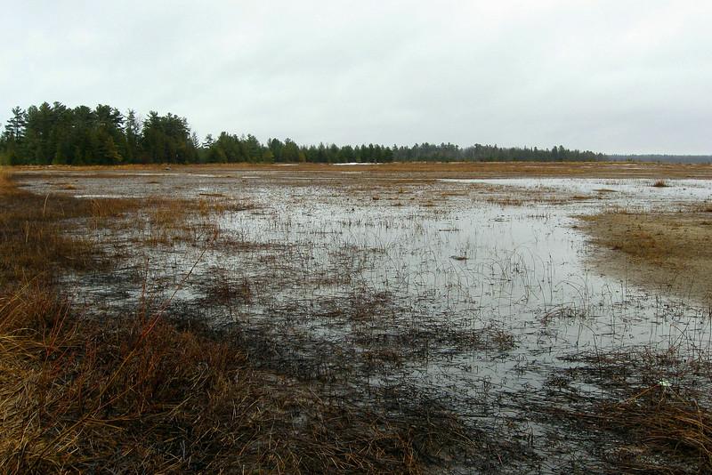 Duncan Bay Shoreline