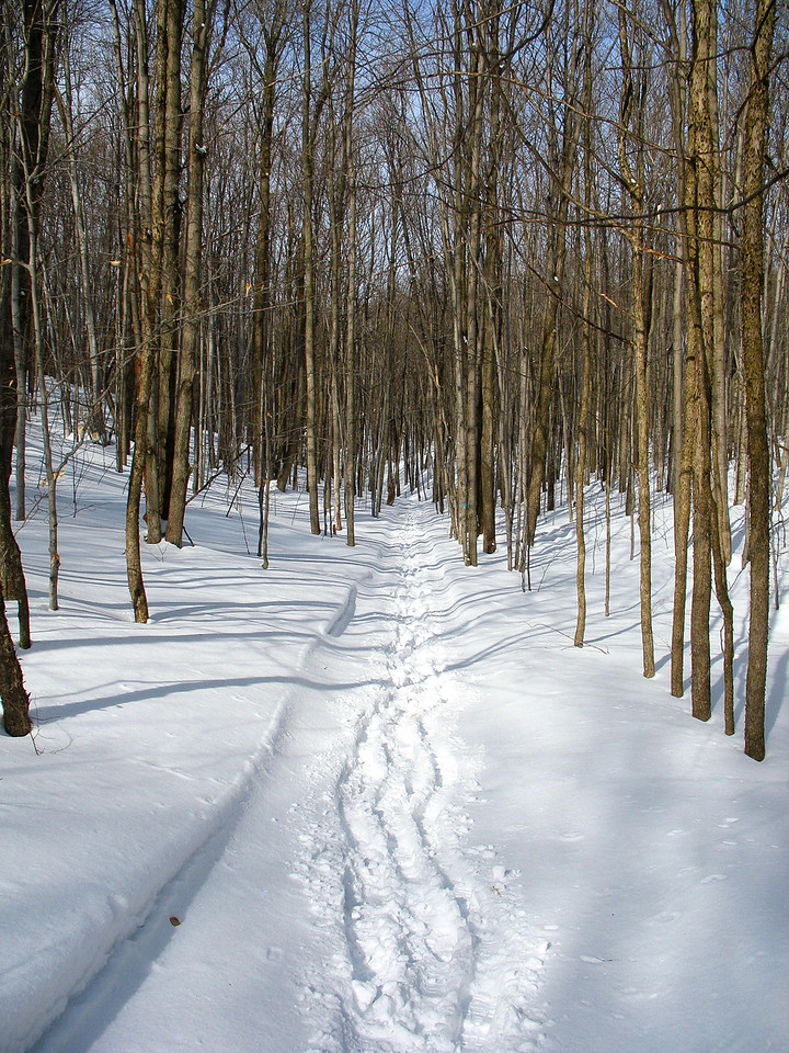 The pleasant descent through the winter woods.