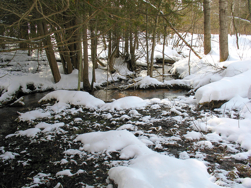 I just couldn't account for the lack of ice on this stream. Its been downright frigid the last month or so as the thick surrounding snowpack can attest to. Yet, the small stream remains unfrozen.