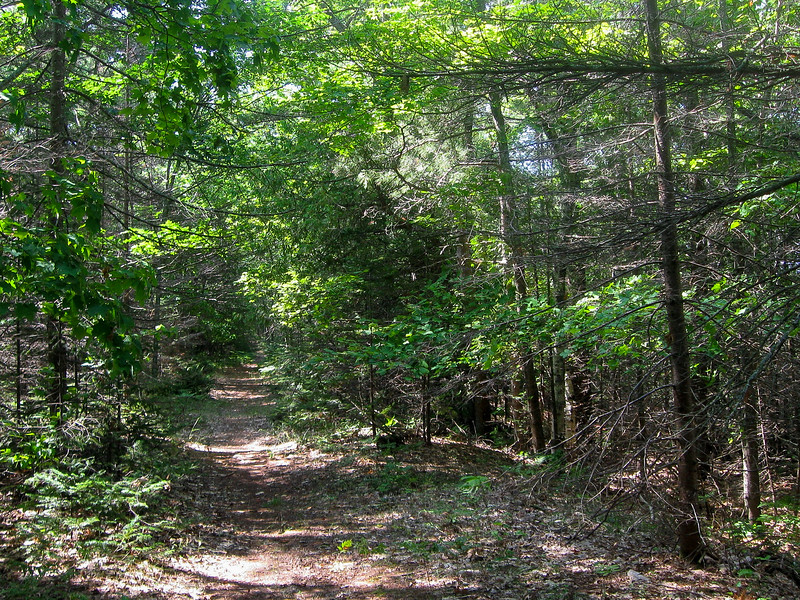 South Shore Path