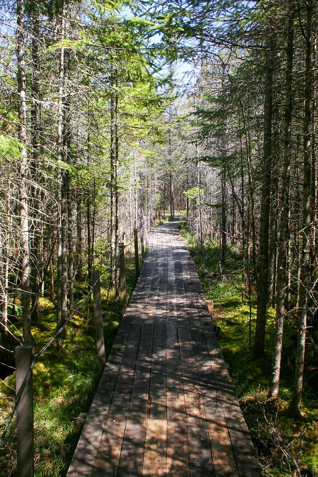 Tamarack Trail