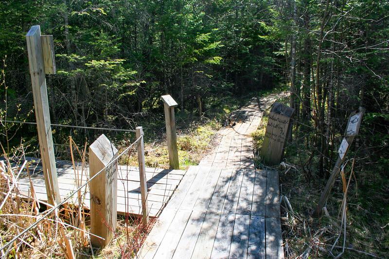 Fern-Woodland Trail Junction