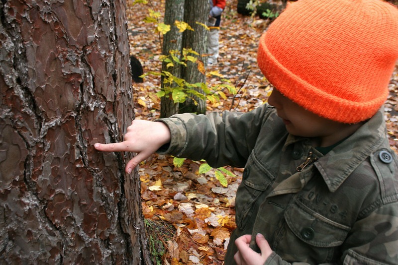 Alex was quite interested by the srange bark on the Red Pines...