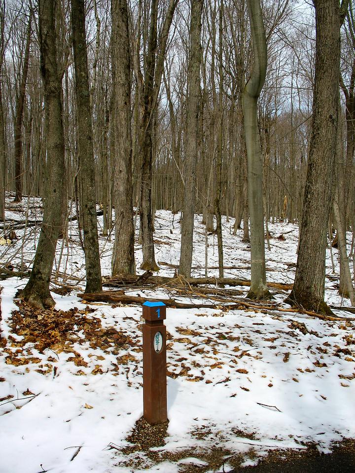 #1 - Northern Hardwood Forest