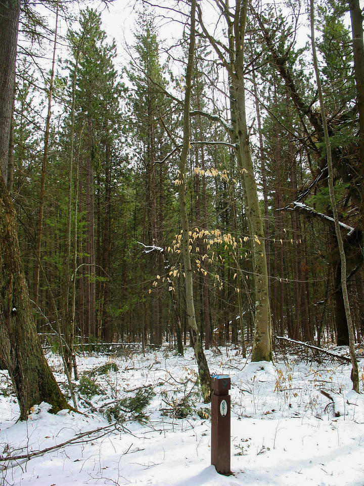 #9 - Old Growth Forest of the Future