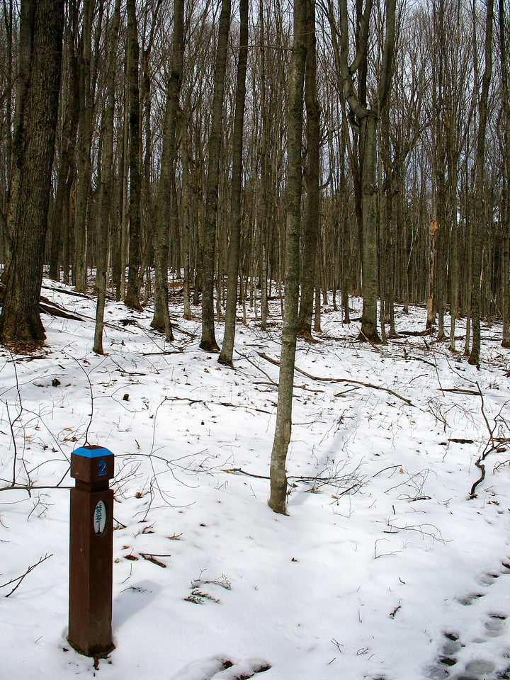 #2 - Wildlife in a Hardwood Forest