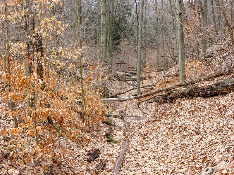 Quiet Area Trail