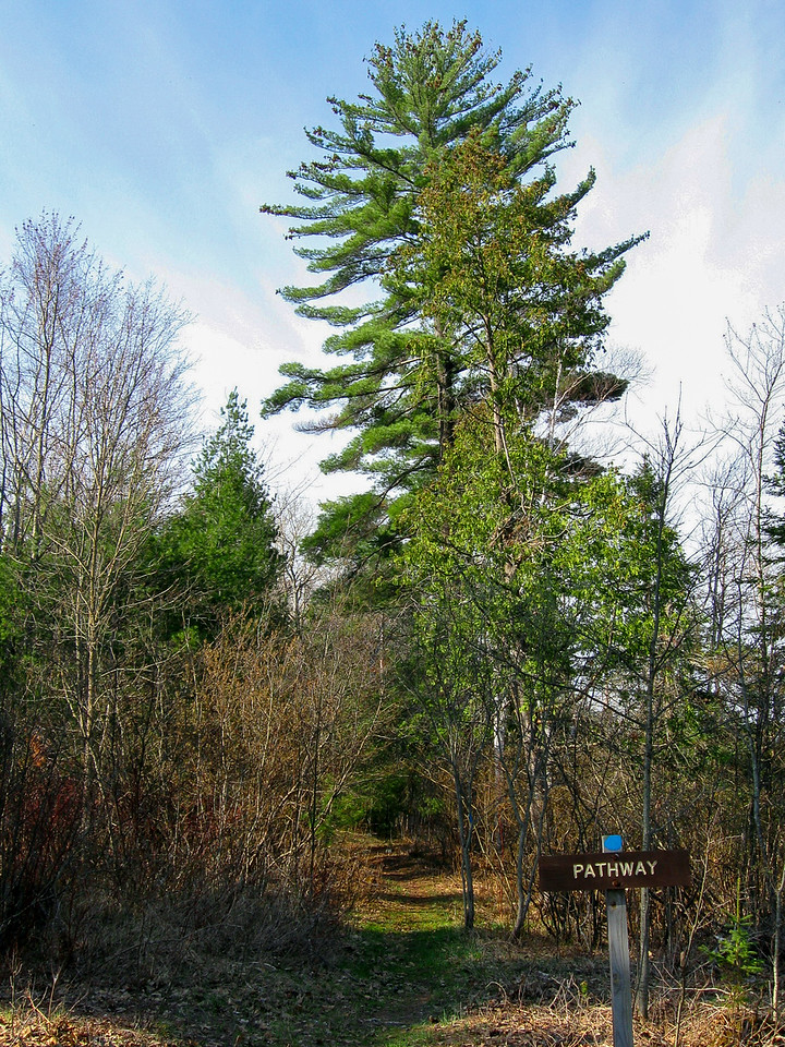 I started the hike by heading south along the east shore of Pickeral Lake...
