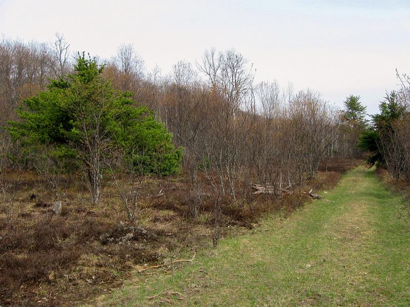 Green Timbers-Honeymoon Cabin Path
