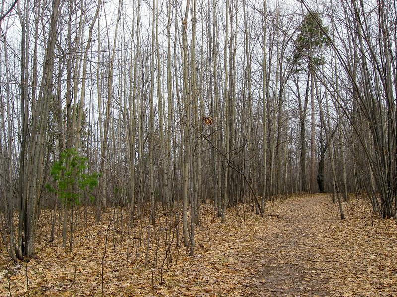 Honeymoon Cabin Path