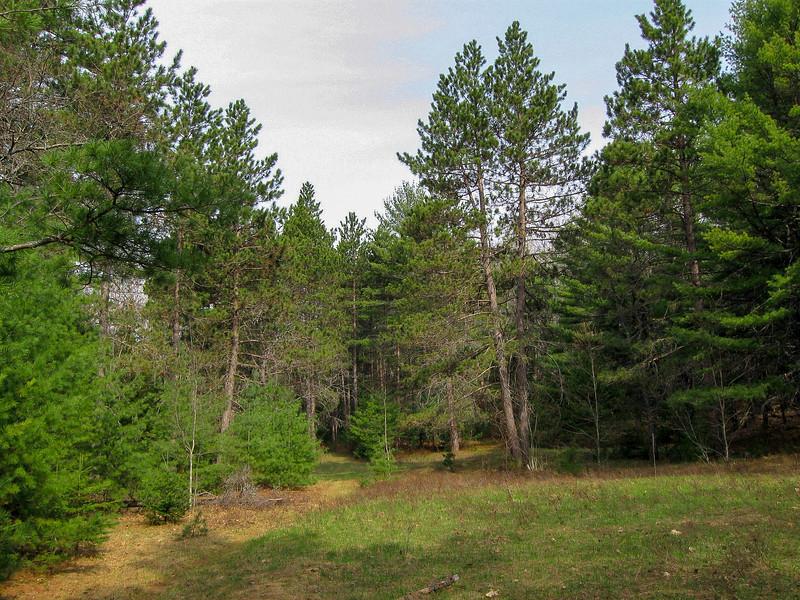 Pickeral Creek Path